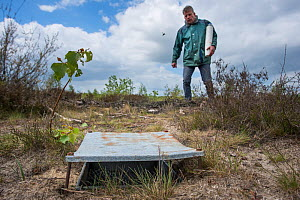 Pitfall trap used for weekly trapping of Ground beetles (Carabidae), researcher approaching in background. Long-term monitoring. has revealed a 72 percent reduction in Ground beetle numbers in past 22...  -  Edwin Giesbers