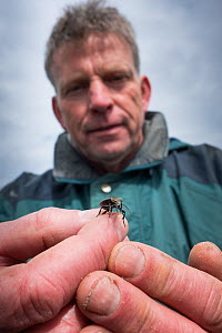 Researcher holding Ground beetle (Carabidae) , caught in weekly trapping. Long-term monitoring. has revealed a 72 percent reduction in Ground beetle numbers in past 22 years. Dwingelderveld National P...  -  Edwin Giesbers