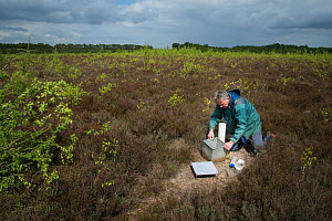 Researcher emptying Ground beetles (Carabidae) from pitfall trap. Long-term monitoring has revealed a 72 percent reduction in Ground beetle numbers in past 22 years. Dwingelderveld National Park, The...  -  Edwin Giesbers