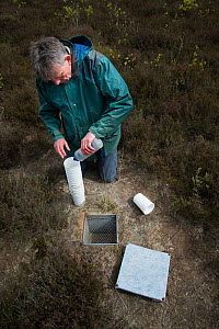 Researcher at pitfall trap used to collect Ground beetles (Carabidae). Long-term monitoring has revealed a 72 percent reduction in Ground beetle numbers in past 22 years. Dwingelderveld National Park,...  -  Edwin Giesbers