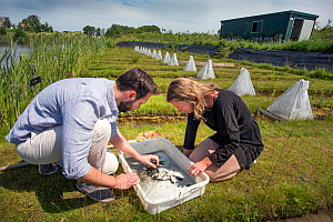 Ecotoxicologists sampling aquatic invertebrates from trial ditches exposed to thiacloprid, a neonicotinoid. Organisms found to be 2500 times more sensitive to the insecticide in the natural environmen...  -  Edwin Giesbers
