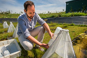 Ecotoxicologist sampling aquatic invertebrates from emergence trap over trial ditch exposed to thiacloprid, a neonicotinoid. Organisms found to be 2500 times more sensitive to the insecticide in the n...  -  Edwin Giesbers