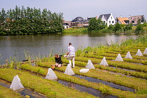Ecotoxicologists sampling aquatic invertebrates in trial ditches exposed to thiacloprid, a neonicotinoid. Organisms found to be 2500 times more sensitive to the insecticide in the natural environment...  -  Edwin Giesbers