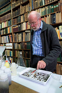 Entomologist sorting through Insect sample in tray, reference books in background. Long-term monitoring has revealed a 75% decline in insect biomass over 27 years. Entomological Society Krefeld, Germa...  -  Edwin Giesbers