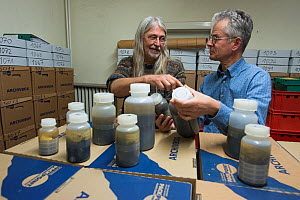 Biologists from Entomological Society Krefeld and Radboud University with Insect specimens from malaise trap. Long-term monitoring has revealed a 75% decline in insect biomass over 27 years. Germany,...  -  Edwin Giesbers