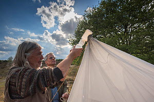 Biologists from Radboud University and Entomological Society Krefeld collecting specimens from malaise trap. Long-term monitoring has revealed a 75% decline in insect biomass over 27 years. Germany, M...  -  Edwin Giesbers