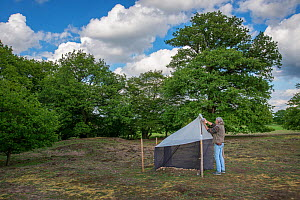 Biologist from Entomological Society Krefeld collecting trapped insects from malaise trap. Long-term monitoring has revealed a 75% decline in insect biomass over 27 years. Germany, April 2019.  -  Edwin Giesbers