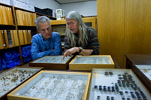 Entomologists examining pinned Insect specimens in collection. Krefeld, Germany. 2019.  -  Edwin Giesbers