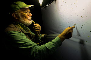 Researcher using pooter to collect insects during trapping session at night, insects attracted by light to white sheet. Long-term monitoring has revealed a 50% decrease in moth numbers in 25 years. De...  -  Edwin Giesbers
