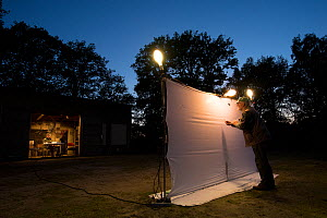 Researcher using pooter to collect insects attracted by light to white sheet during trapping session, another researcher waiting at desk in background to identify and record insects. Long-term monitor...  -  Edwin Giesbers