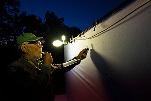 Researcher using pooter to collect insects during trapping session, insects attracted by light to white sheet. Long-term monitoring has revealed a 50% decline in moths over 25 years. De Kaaistoep Natu...  -  Edwin Giesbers