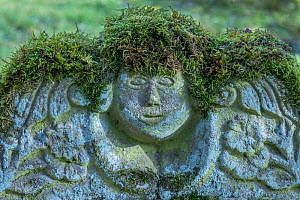 Lichen and Moss covering churchyard Headstone, Monmouthshire, Wales, UK  -  Phil Savoie