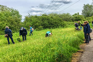 People on a Bug Life Bee ID Field class, RSPB Newport Wetlands, Monmouthshire, Wales, UK, June.  -  Phil Savoie