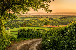 Welsh countryside landscape and country lane, Monmouthshire, Wales UK, May.  -  Phil Savoie