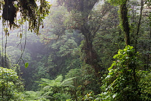 Cloud forest, El Triunfo Biosphere Reserve, Chiapas, southern Mexico, May  -  Claudio Contreras