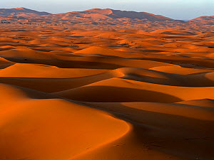RF - Sand dunes with shadows in evening. Erg Chebbi, Sahara Desert, Morocco. 2019.  (This image may be licensed either as rights managed or royalty free.)  -  Pal Hermansen