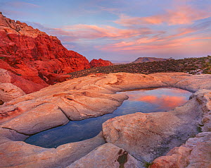 Red sandstone formations rise from surrounding Mojave Desert with reflection in 'pot hole pools' at sunset, Red Rock Canyon National Conservation Area, Nevada, USA.  -  Jack Dykinga