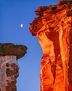 Sandstone pinnacles with dawn's red light and crescent moon setting, Colorado Plateau, Utah, USA.  -  Jack Dykinga