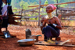 Kayan Lahwi woman having her morning wash and cleaning her brass neck coil with rice straw. The Long Neck Kayan (also called Padaung in Burmese) are a sub-group of the Karen ethnic people from Burma....  -  Eric Baccega