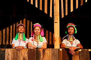 Kayan Lahwi women wearing brass neck coils and traditional clothing, stand on house deck . The Long Neck Kayan (also called Padaung in Burmese) are a sub-group of the Karen ethnic people from Burma. T...  -  Eric Baccega