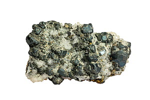 Tennantite, copper arsenic sulfosalt mineral, found in Zacatecas, Mexico against white background  -  Philippe Clement