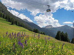 Cable car over species rich alpine meadow with Meadow clary (Salvia pratensis) and Yellow rattle (Rhinanthus sp), coniferous forest on mountains in background. Fassa Valley, Dolomites, Trentino, Italy...  -  Paul  Harcourt Davies