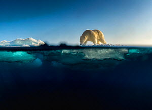 Polar bear (Ursus maritimus) walking on drifting sea ice. Svalbard, Norway.  -  Ole  Jorgen Liodden