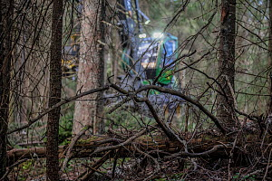 View through trees in coniferous forest to harvester involved in logging operation. Akershus, Norway. August 2019.  -  Pal Hermansen
