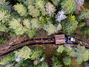 Logging operations in Spruce forest with harvester and logs, aerial view. Ski, Akershus, Norway. March 2020.  -  Pal Hermansen