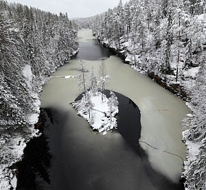 Island in partially frozen lake, trees covered in snow, aerial view. Ostmarka, Viken, Norway. November 2019.  -  Pal Hermansen
