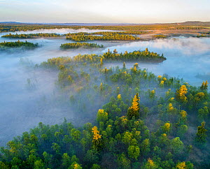 Forests and bogs in morning mist, aerial view. Golsfjell, Viken, Norway. May 2018.  -  Pal Hermansen