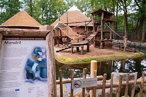 Zoo sign about the Mandrill (Mandrillus sphinx) in front of the enclosure, Ouwehands Zoo, Rhenen, The Netherlands.  -  Edwin Giesbers