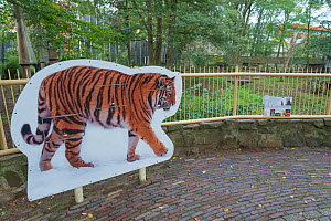 Siberian tiger sign in front of the Siberian tiger (Panthera tigris altaica) outdoor enclosure, Ouwehands Zoo, Rhenen, The Netherlands. Captive.  -  Edwin Giesbers