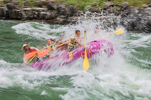Water spraying people going through Lunch Counter Rapids in paddle raft. Snake River, Jackson Hole Wyoming, USA. July 2006.  -  Jeff Foott