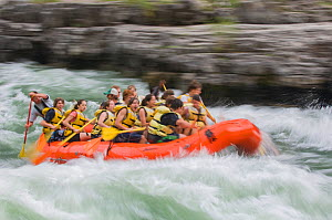 Group of children white water rafting through Lunch Counter Rapids, Snake River, Jackson Hole, Wyoming, USA. July 2006.  -  Jeff Foott