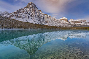 Mount Chephren and coniferous forest reflected in Lower Waterfowl Lake. Banff National Park, Alberta, Canada. October 2018.  -  Jeff Foott