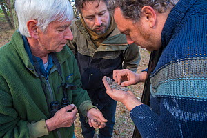 Researchers examining Raptor pellets to identify eaten prey. Part of a 60 year long-term study led by Fred Koning to monitor raptors and their nests in a 3,400 hectare area of coastal dunes. Near Amst...  -  Edwin Giesbers