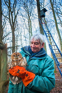 Bird ringer Fred Koning holding Tawny owl (Strix aluco) during ringing session. Part of 60 year long-term study to monitor raptor nests in a 3,400 hectare area of coastal dunes. Near Amsterdam, The Ne...  -  Edwin Giesbers