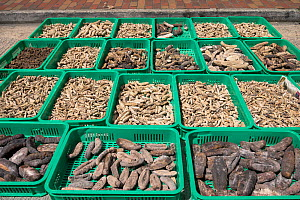 Various species of Sea cucumber are dried in baskets on the street of Hong Kong Island, June 2019.  -  Sirachai Arunrugstichai