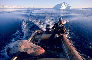 Inuit hunter Qarkutsiaq Kristiansen with a Bearded seal (Erignathus barbatus) over the side of his boat after an autumn hunt. Northwest Greenland. 1987.  -  Bryan and Cherry Alexander