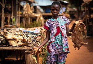 Young girl offering the dried carcass of a pangolin for sale. Voodoo market outside of Ouidah, Benin, West Africa. January 2020. Mandatory credit: Aaron Gekoski / World Animal Protection / naturep...  -  Aaron Gekoski / World Animal Protection