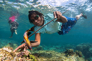 Woman catching a fish in a reef, Atauro Island, Timor-Leste, South east Asia. A group of women know locally as the �Wawata Topu' have taught themselves how to freedive, and catch fish using homemade s...  -  Aaron Gekoski / Scubazoo