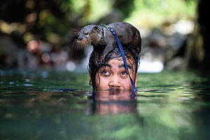 Exotic pet owner takes his Asian small-clawed otter (Aonyx cinereus) for a swim at a waterfall in remote Indonesia. March 2019. Mandatory credit: Aaron Gekoski / World Animal Protection / naturepl...  -  Aaron Gekoski / World Animal Protection