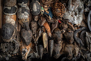 Numerous species, including baboons, hornbills, turtles and chameleons, for sale in a voodoo market. Cotonou, Benin, West Africa. January 2020. Mandatory credit: Aaron Gekoski / World Animal Prote...  -  Aaron Gekoski / World Animal Protection