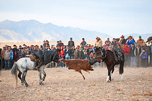 Buzkashi, Mongolian tug of war, with a goat skin. Men on horseback with crowd watching in background. Eagle Hunters Festival, Bayan-Olgii, Altai Mountains, Western Mongolia. October 2008.  -  David Tipling