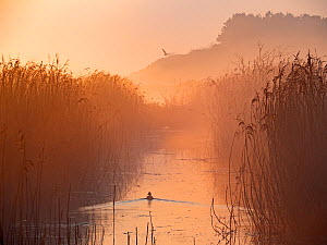Misty reedbed at dawn. Main drain, Cley Marshes, Norfolk Wildlife Trust Reserve, England, UK. April.  -  David Tipling