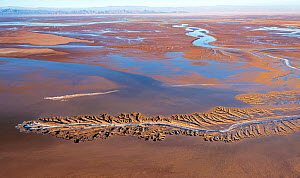 Aerial view of alluvial patterns in tidal mudflats of Colorado River Delta where there is tidal encroachment from the Gulf of California. Baja California, Mexico, 2019.  -  Jack Dykinga