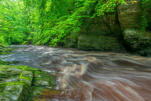 River flowing through woodland. Roe Valley Country Park, County Londonderry, Northern Ireland, UK. August 2020.  -  Robert  Thompson