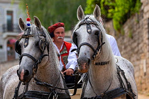 Horses pulling man in carriage during Alka procession. Held on the first Sunday in August since 1715 the Alka commemorates the victory of Christians over Ottoman Turks. Inscribed on UNESCO Intangible...  -  Kristel Richard