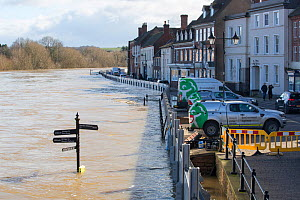 Environment Agency flood defences alongside flooded River Severn. The river overtopped the barriers after Storm Ciara and Storm Dennis, the wettest February recorded in the UK. Bewdley, Worcestershire...  -  Ashley Cooper
